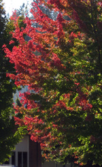 Hennessy School Fall Color