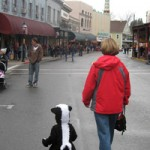 A skunk ambles down Mill St