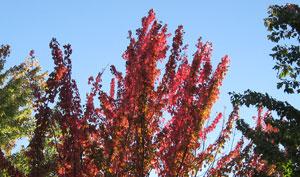 Memorial Park Fall Color, Grass Valley