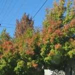 Fall Color on South Auburn St