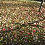 Storm strewn leaves